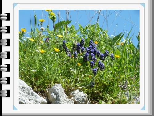 """Pour Andrée : partage """"premiers balbutiements du printemps,"""