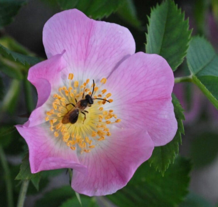 Fleurs-6 1573 a
