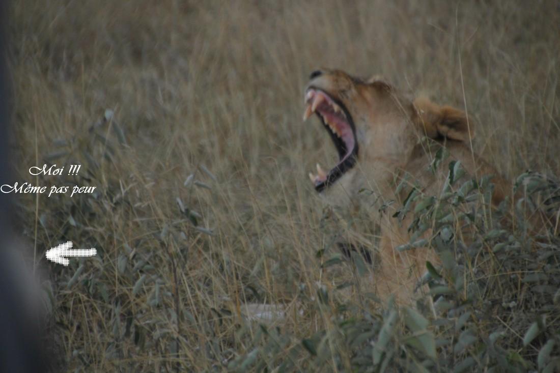 AFRIQUE DU SUD juin 2018 : LIONS
