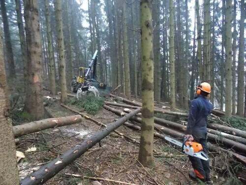 Chantier bois pour reconstruire la ruine