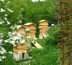 Emplacement du rucher