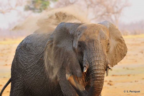 Elephant, water and mud: the perfect combination!