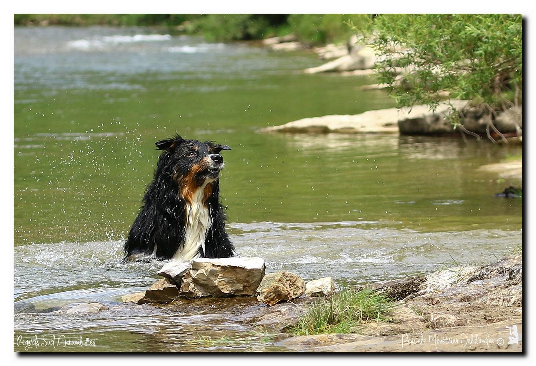 Gampo et Loo à la rivière