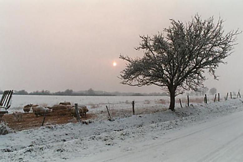 De la neige encore ce matin...