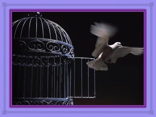 """Sortir de la """"cage"""""""