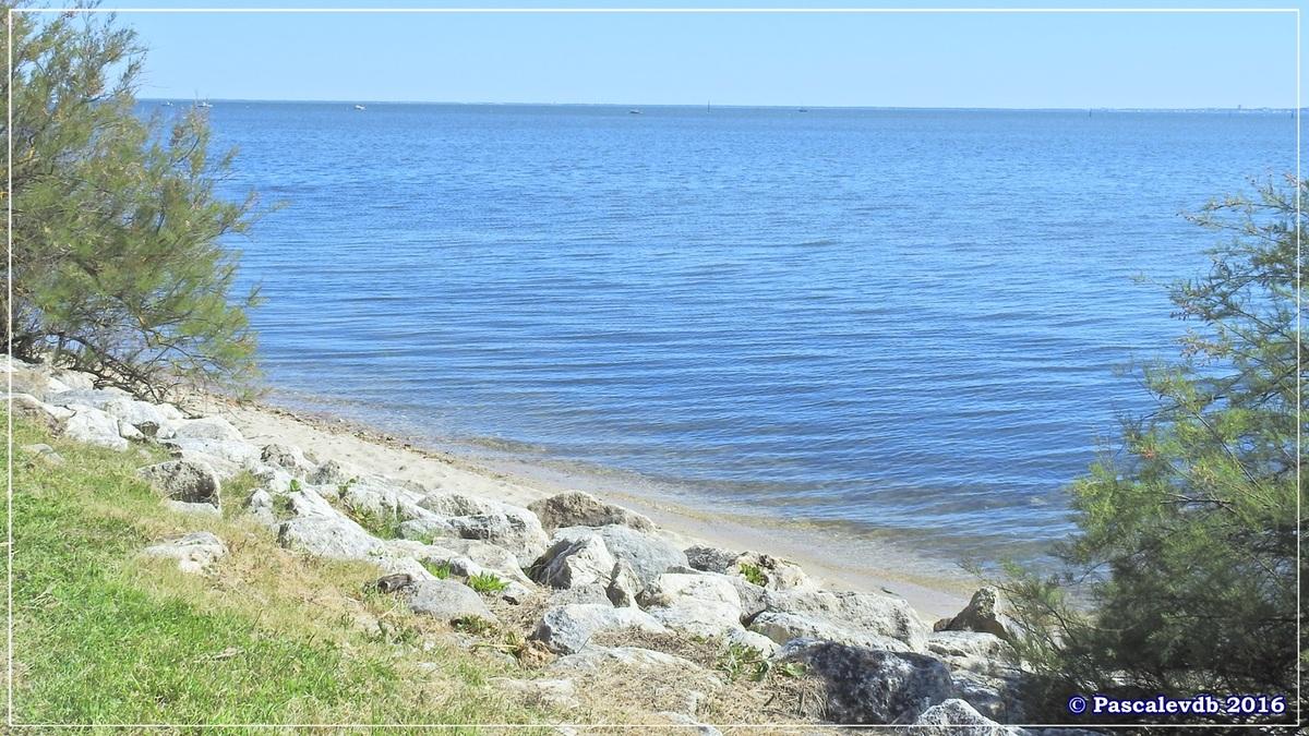 Pointe de Saint Brice et prés salés d'Arès - Mai 2016 - 5/9