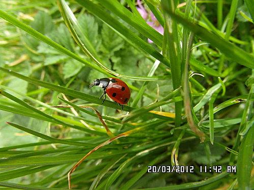 nature-20-mars-2012-024.JPG