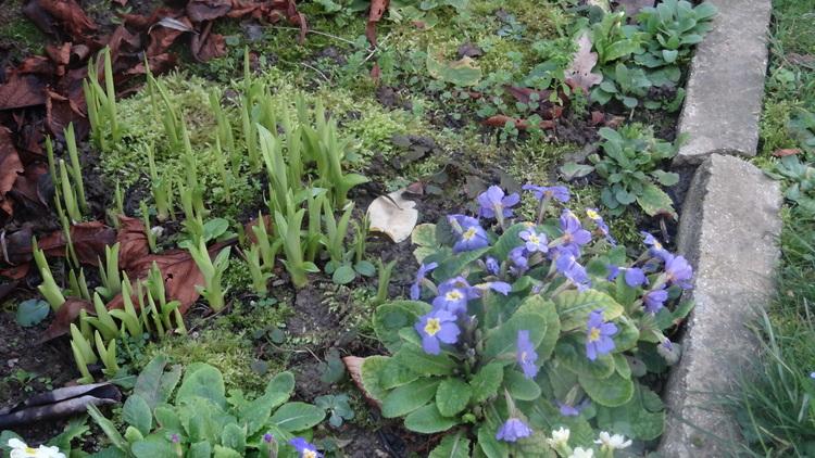 Un Petit tour au Jardin ...