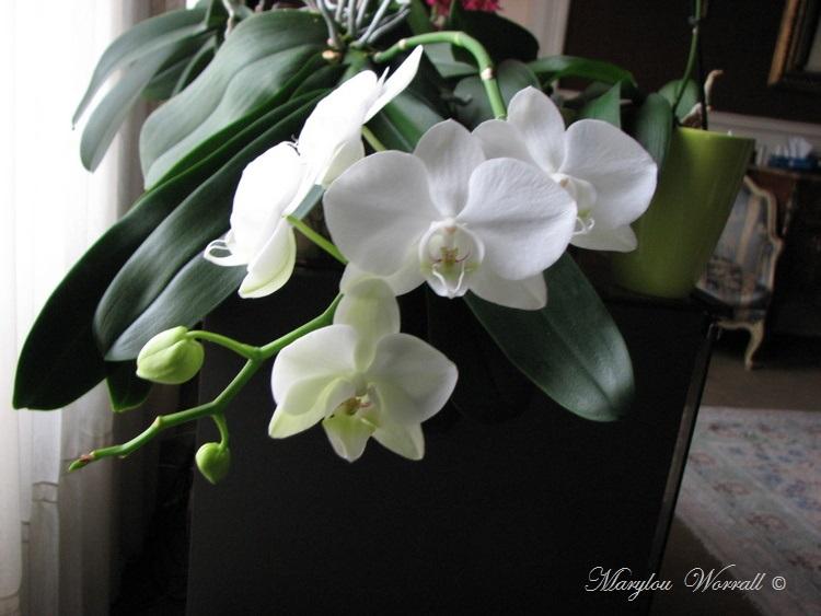 Mes fleurs pour Noël