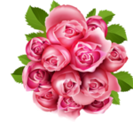 des roses en hommage a ma belleet gentille Emilie
