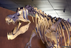 """Résultat de recherche d'images pour """"museum de toulouse dinosaure"""""""
