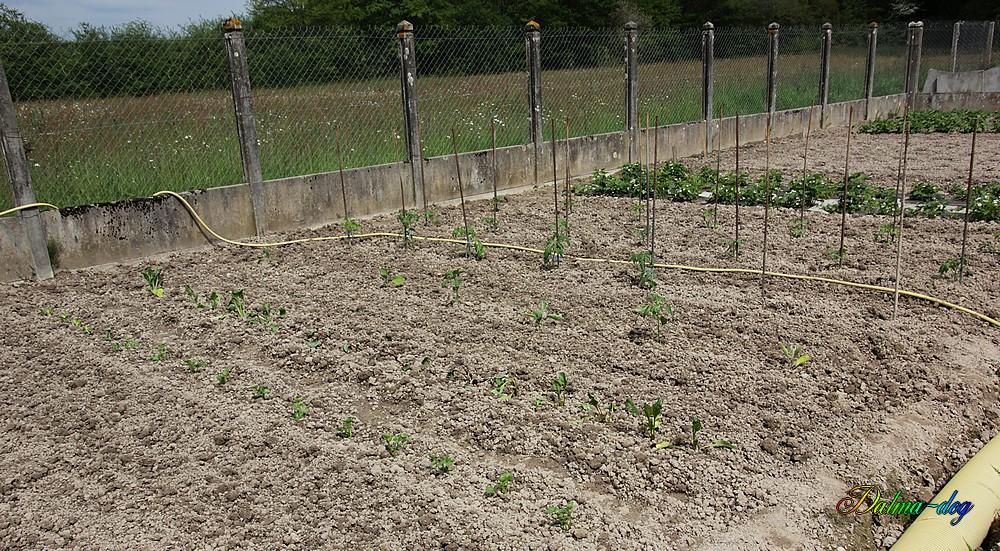 jardin fait !!!!