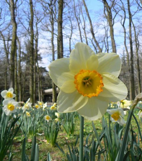 Les merveilles du printemps révélées par vos photos