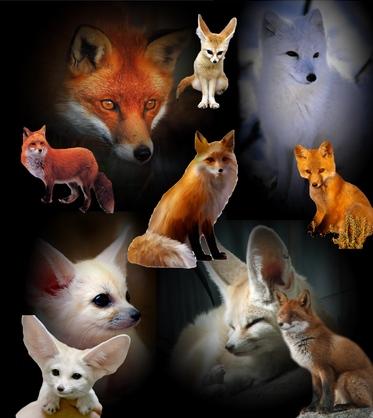 le dictionnaire du renard