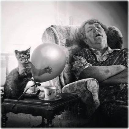 08 - Des chats, des femmes...