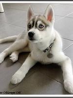 Jypsie (2 mois)