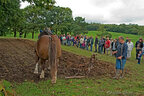 labourage avec brabat et cheval breton