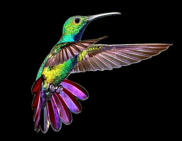 Mist animaux espace psp de lily - Oiseau mouche dessin ...