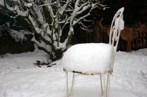 Lévriers dans la neige