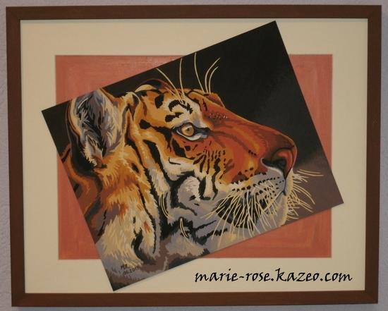 tigre royal fini