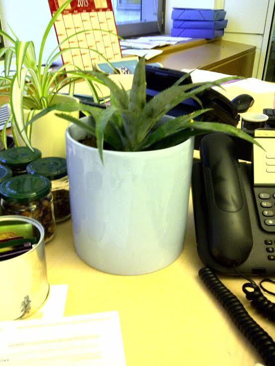 recup-ananas