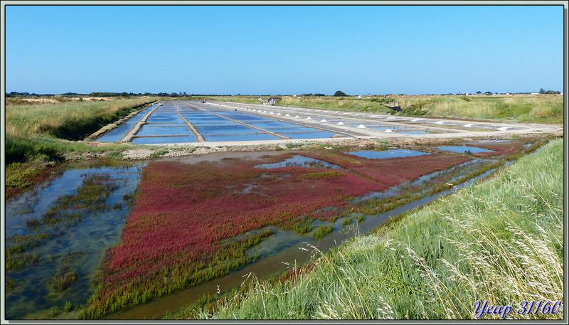 Marais salant et son paludier - Ars-en-Ré - Île de Ré - 17