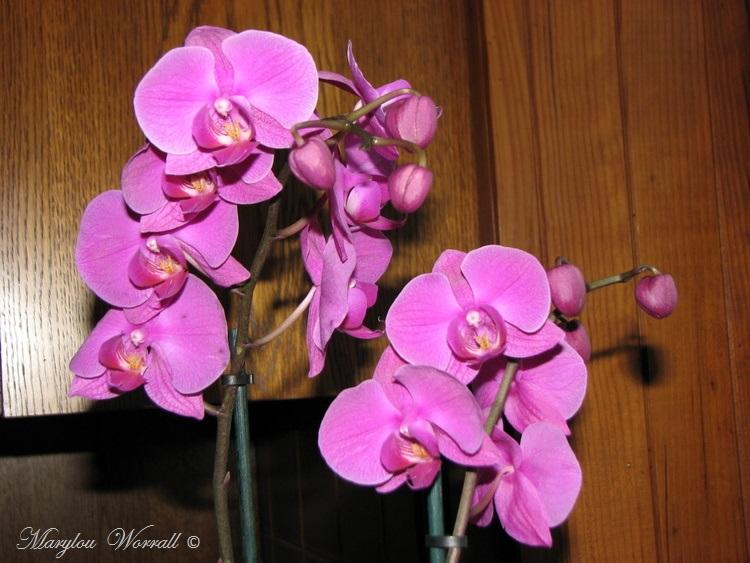 Chouette ! Une Nouvelle Orchidée sauvée