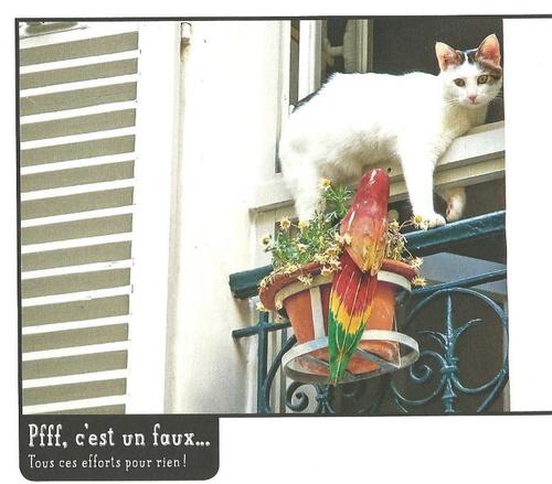 Les chats aussi...