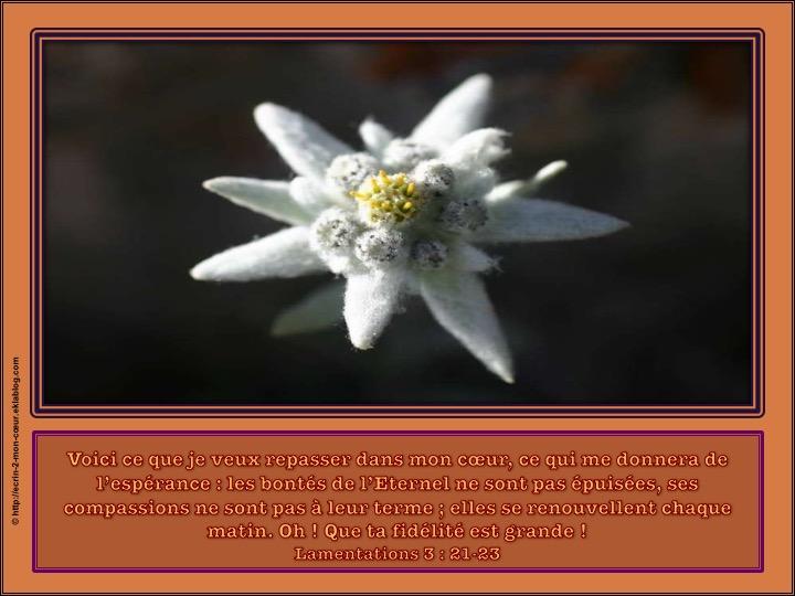 Les bontés de l'Eternel se renouvellent chaque matin - Lamentations 3 : 21-23
