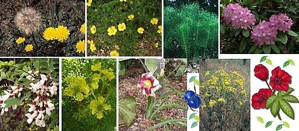 Plantes toxiques 5