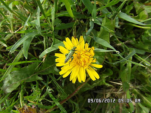 fleurs-9-Juin-001.JPG