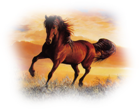 Fête du cheval à Vergongheon