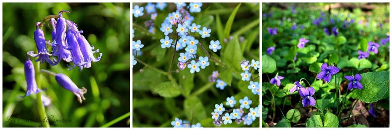 Notes florales [Défi du lundi] - jacinthe des bois - myosotis - violette