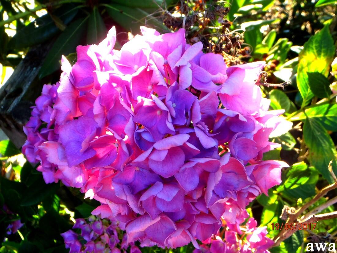 Les belles surprises du jardin avant notre départ pour Lacanau