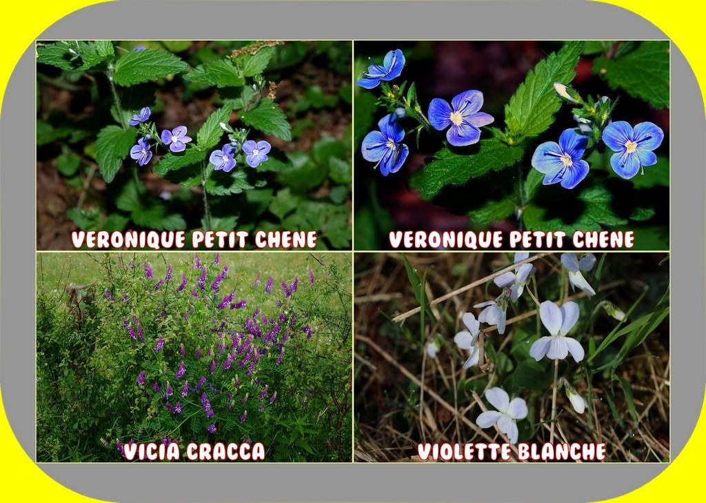 PHOTOS D'HIER ET PLANTES 41