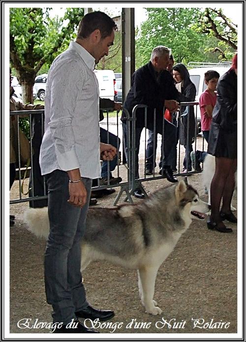 Exposition canine de Monclar de Quercy (26 avril 2015)