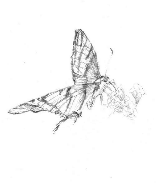 Papillons III