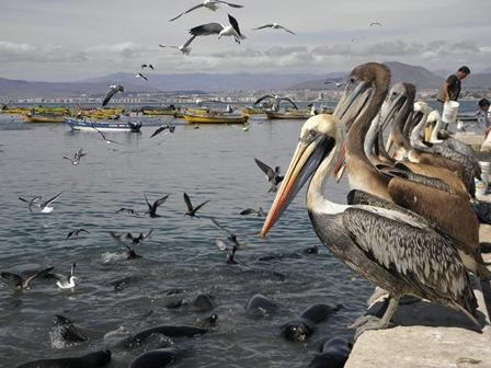 Antofagasta - La Serena