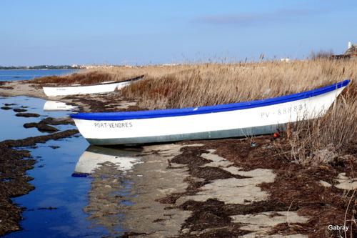 Des barques au Barcarès