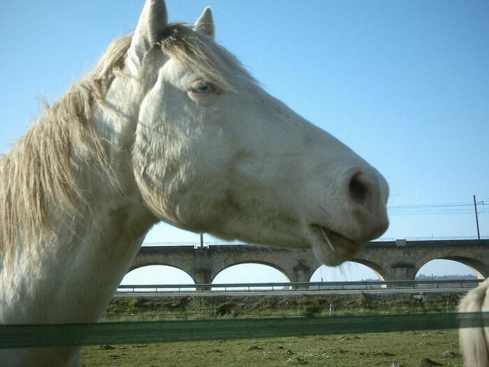 une rencontre avec des chevaux