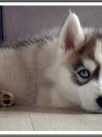 Tetsu (2 mois), chez son nouveau propriétaire