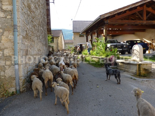 Moutons 2012