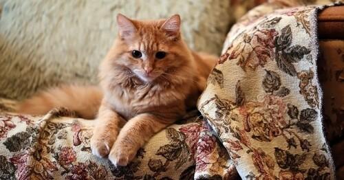 Des produits d'intérieur dangereux pour nos chats