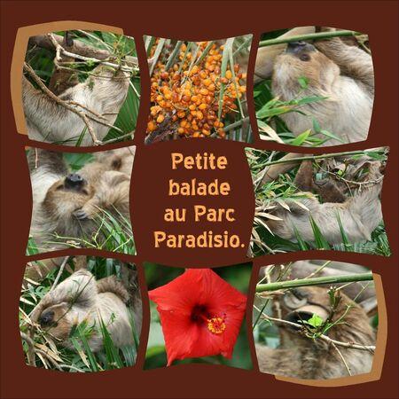 Le_paresseux_2