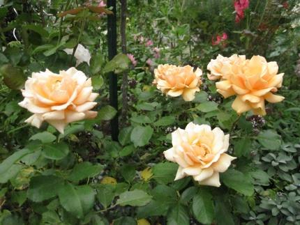 Mon jardin landais à la mi-septembre