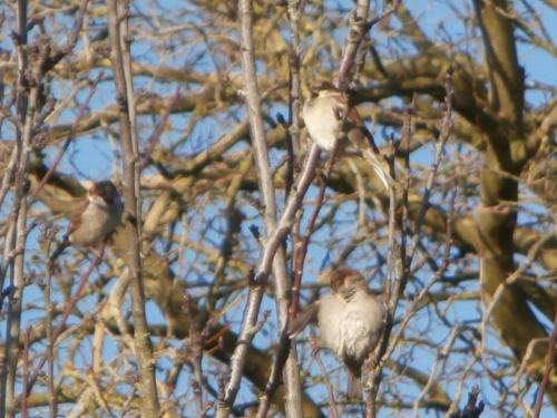 Oiseaux sur des branches