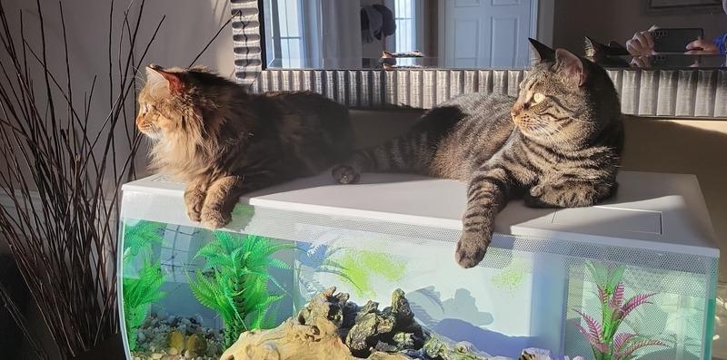 Les chats de Sacha mon fils cadet