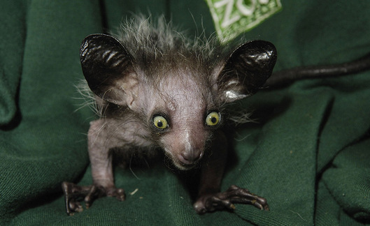 Savez-vous qui est cet étrange animal ?