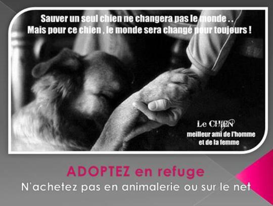 Sauver 1 chien, ne sauvera pas le monde, c'est vrai, mais pour ce chien le monde sera changé pour toujours