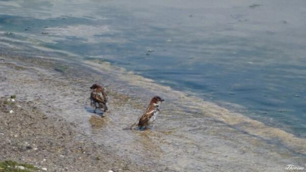 Yvoire, faune et flore lac léman (1)